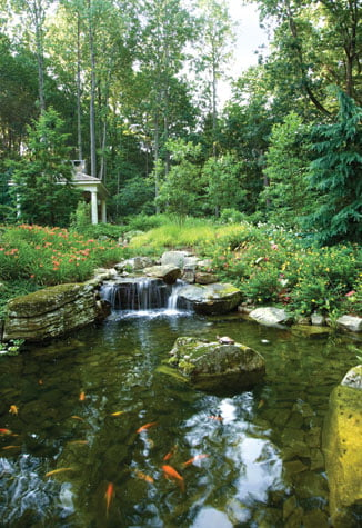 Koi pond - Water garden
