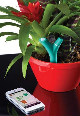 Plants - Flowerpot