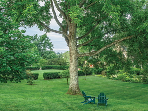 Tree - Meter