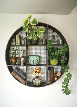 Shelf - Collectable