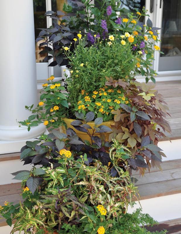 Garden - Houseplant