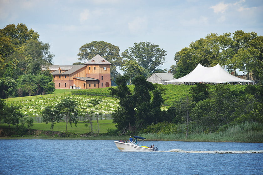 chateau-bu-de-Winery-vineyard
